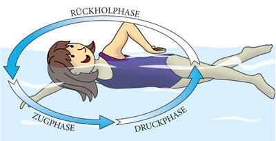 Die 3 Phasen beim Kraulschwimmen