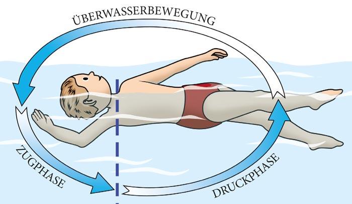 Schaubild Phasen beim Rückenschwimmen